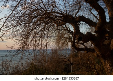 Old tree trunk and branches in sunset, Istanbul