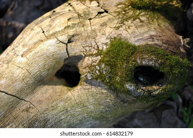 Old tree trunk with holes and moss, background
