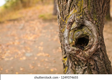 Old tree trunk with hollow bark texture, horizontal natural background with copy space, close up detail