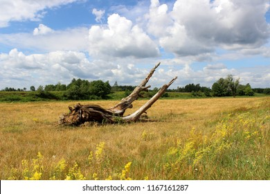 Old tree trunk lying on a flourishing field near the river. Country summer landscape with dead dried snag, valley with yellow wild flowers and blue cloudy sky.