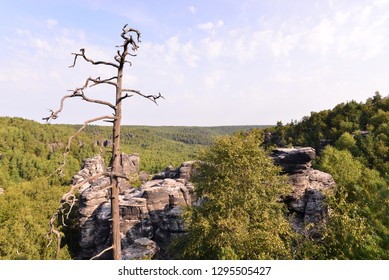 Old tree trunk on a rock above nature with forests in summer.