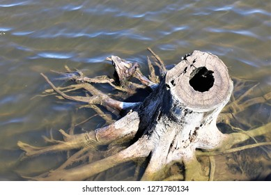 An old tree trunk and roots left partially submerged in the water at a local pond.