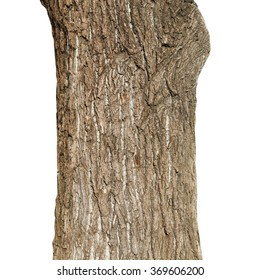 old tree trunk, weeping willow tree isolated on white background