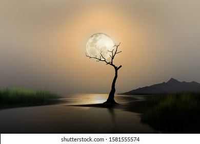 an old tree under the moonlight