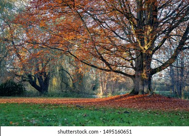 Old tree with wonderful red autumn leaves