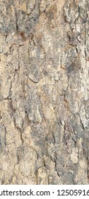 An old tree you can see bark tranform to another colour before is strenght brown and then become light brown same as life wgen we are getting older with more wisly and smater than young but still aged
