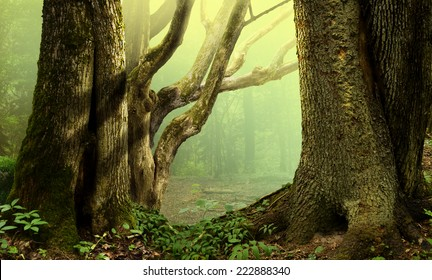 Old trees in fantasy forest