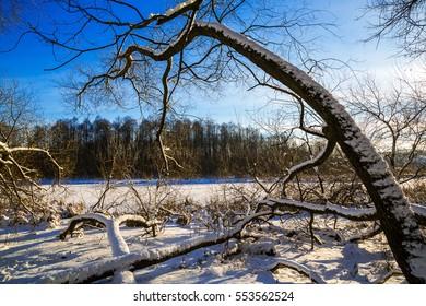 old trees in Loshitsa park, manor, landscape, Minsk, Belarus, winter,
