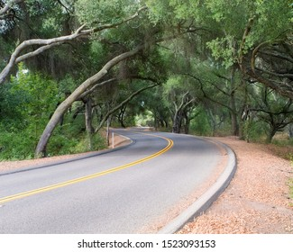 Old trees over hanging the road