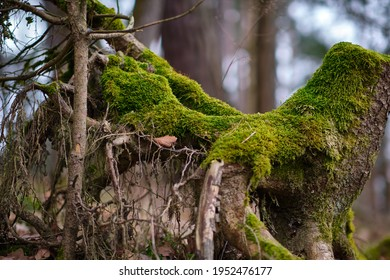 Old treestump with moss on it