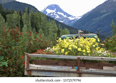 Old truck bed loaded with colorful flowers at Crow Creek Mine near Girdwood, Alaska