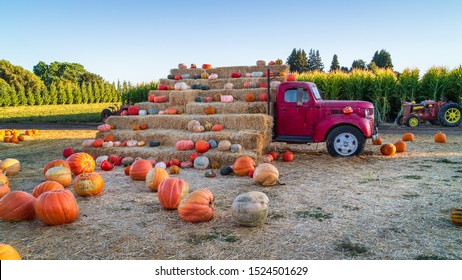 An old truck sits idyllically aside a sun kissed cornfield. A fresh harvest of pumpkins rest peacefully on bales of hay marking the arrival of autumn & halloween.