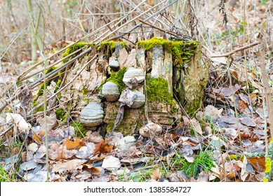 Old trunk covered by hoof fungus