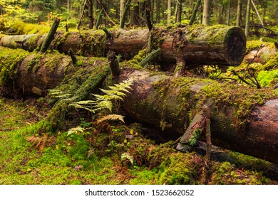 old trunks covered with moss in soft light