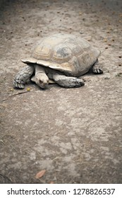 Old turtle on dirt