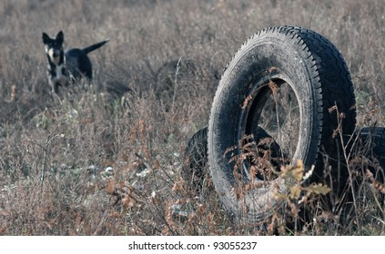 old used tyre and dog