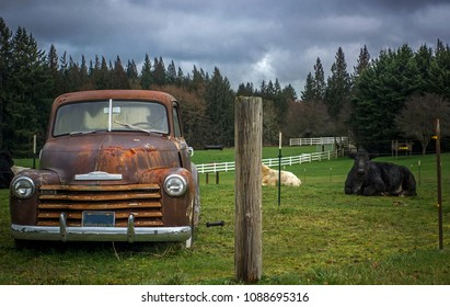 Old vehicle and cow