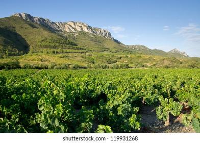 Old vineyard at Maury, landscape