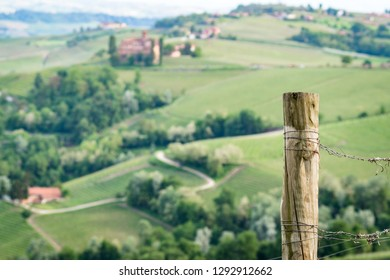 old vineyard pole in the Langhe. Famous territory for Barolo wine