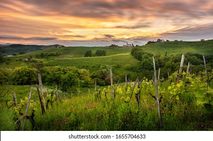Old vineyard at sunset in a Haloze region wich is one of the best wine regions in the world. In th backgrund we can see shurch st. Ana.