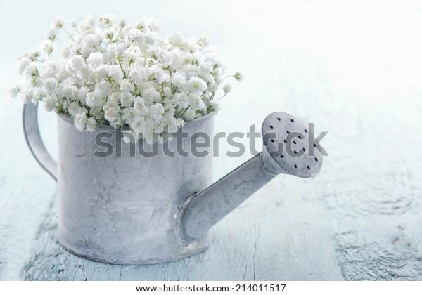 明るい青のみすぼらしい背景に白い赤ちゃんの息のジプシーの花が、古いビンテージメタルの水やりに満たされる