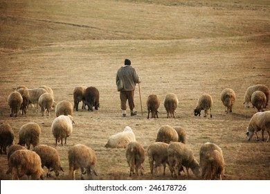 old vintage pastoral landscape with herd of sheep and his shepard near bulgarian small village