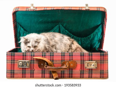 Old vintage suitcase with cat