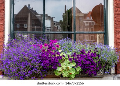 Old and vintage windows decorated with small pant and flowers, Reflection on the glass of traditional canal houses from other side, Outside house along the street, Amsterdam, Netherlands.