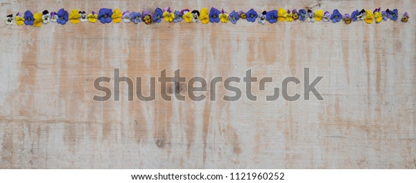 old vintage wooden background with border of fresh viola blossoms