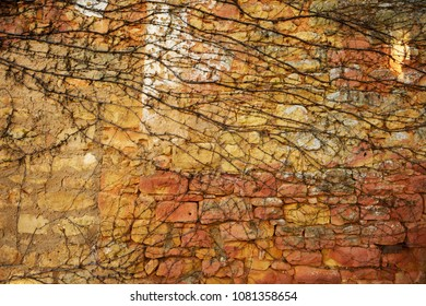 Old wall background. Old irregular stone pattern with dried vine branches