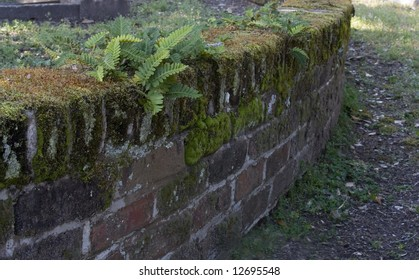 old wall with ferns