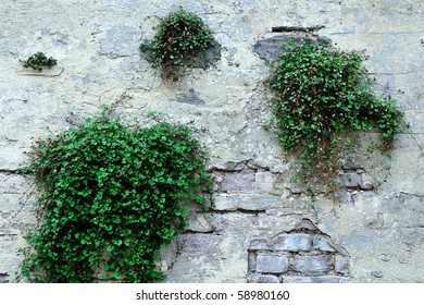 old wall and growing plants