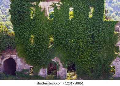 Old wall of ruined building overgrown with green ivy. Montenegro, Risan town