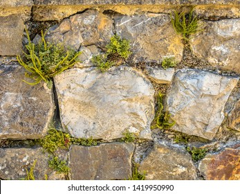 Old wall with typical wall flora with Wall-rue (Asplenium ruta-muraria),  Maidenhair spleenwort (Asplenium trichomanes), Ivy-leaved toadflax (Cymbalaria muralis) plants, ferns and flowers