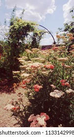 Old walled English country cottage garden of stately home with flowers and plants. Shot on film.