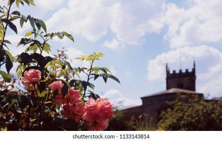 Old walled English country cottage garden of stately home, Shot on film.