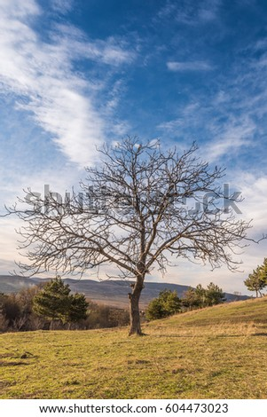 Old Walnut Tree Beginning Spring Cloudy Stock Photo Edit Now
