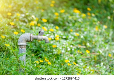 Old water tap in garden with yellow flower field, Nature background.