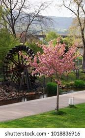 Old waterwheel behind a cherry tree