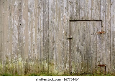 Old weathered barn wood wall with closed access door and grassy mossy bottom