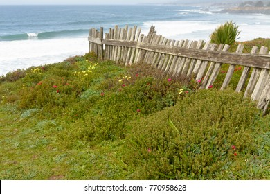 An old weathered fence runs to the edge of a cliff on the northern california coast line. Lush greenery and blue ocean. breaking waves create white water.