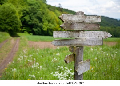 old weathered and mossy signpost with path and forest landscape in the blurred background