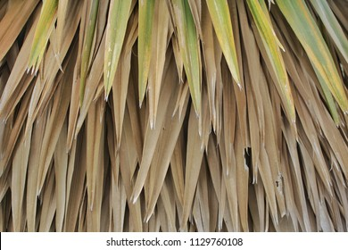 Old weathered palm leaf roof of hut,Dried palm leaves texture.