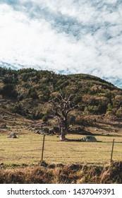 Australian Country Landscape Images, Stock Photos & Vectors
