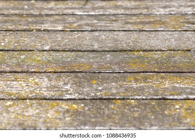 Old weathered wooden decking or floor with planks covered in dried lichen in a full frame background texture