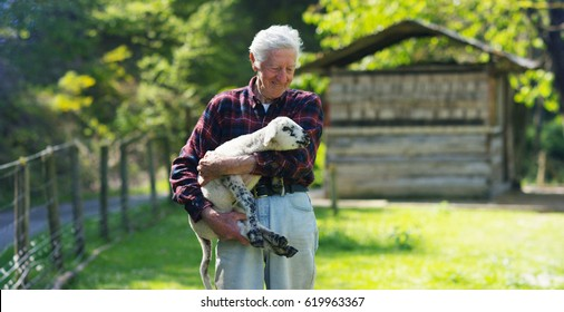 An old, well-smiling farmer, holds in his hands his beloved white lamb, which he raised himself, against the backdrop of nature and a barn, the concept: ecology, livestock, farming, bio, nutrition.