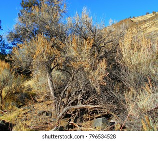 The Old West - Sagebrush scene in the Crooked River Canyon - south of Prineville, OR