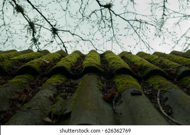 Old wet roof of shingles in green moss