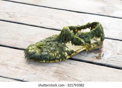 Old wet shoe full of algae