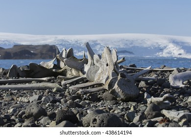 Old whale bones left in the Antarctic from the whaling days